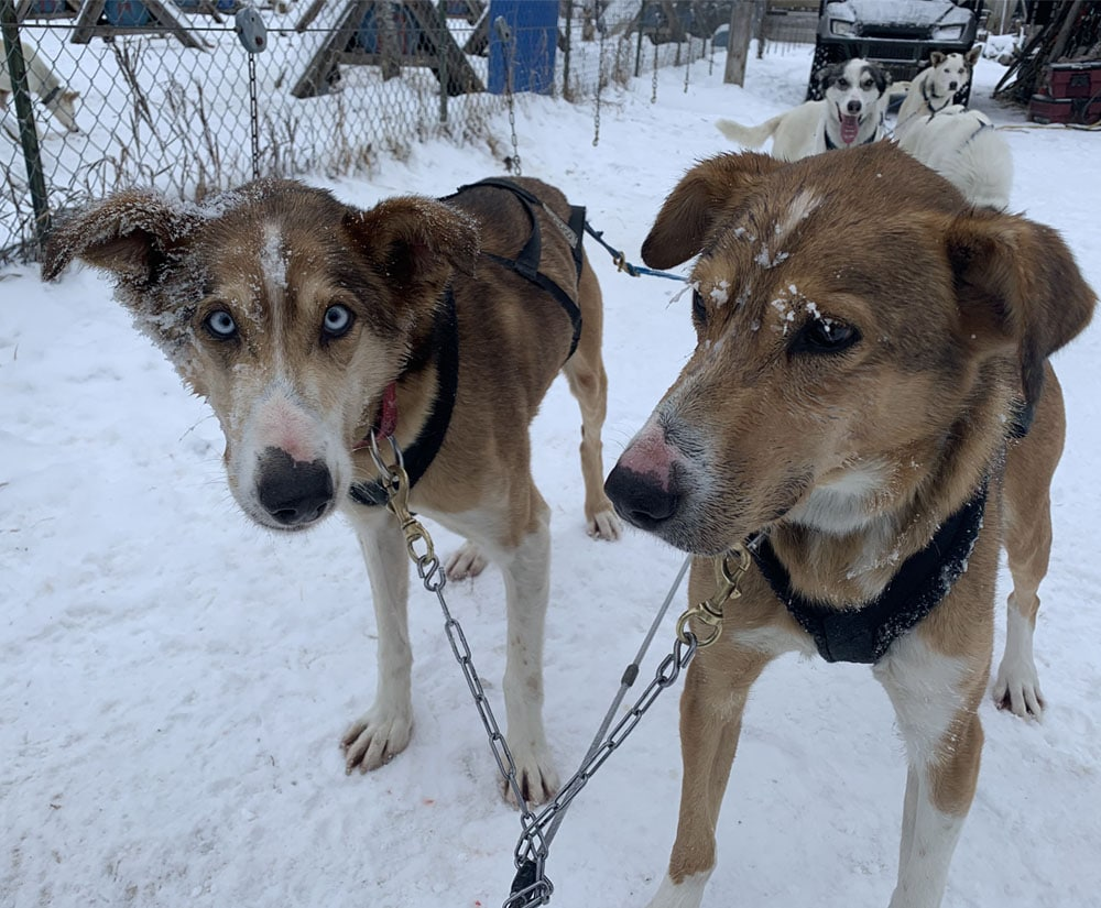 Kiwatchi Adventure-Two Dogs in Snow