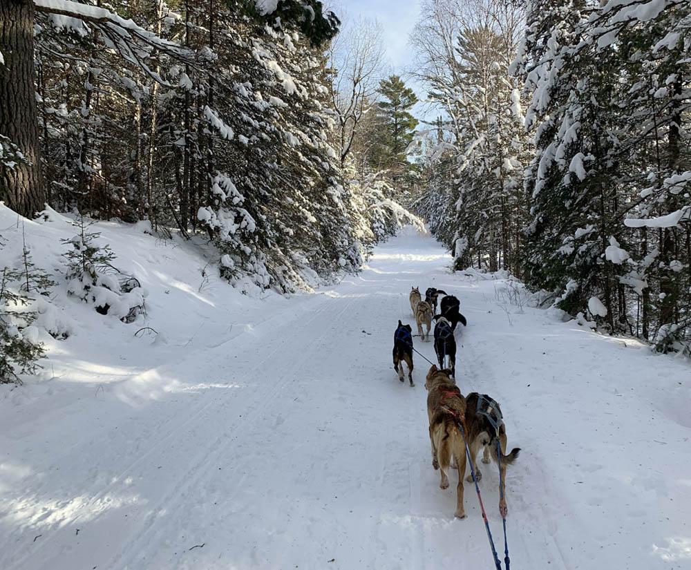 Kiwatchi Adventure-Dog Sled Team