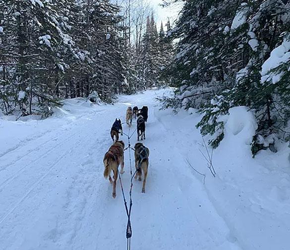 Kiwatchi Adventures Dog Sled Team